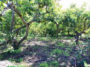 Foto visita al bosque de aguacates con escapadas en Málaga