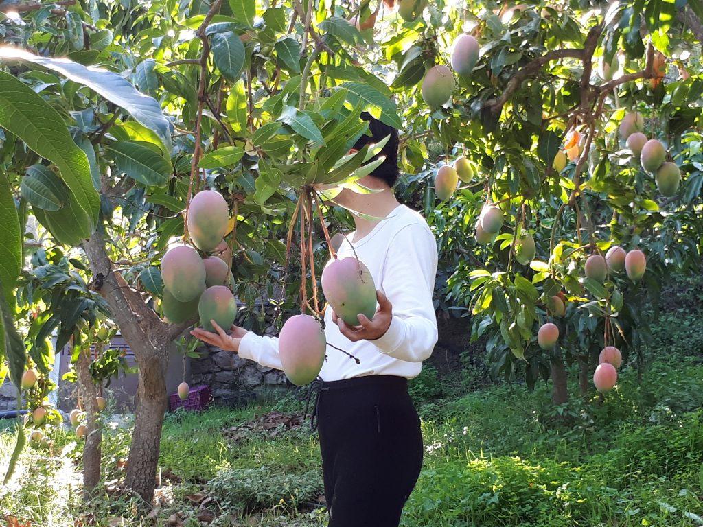 Foto visita plantación de tropicales y mangos con Escapadas en Málaga
