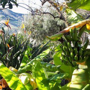 Foto visita plantación de tropicales con escapadas en Málaga